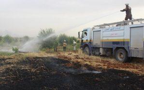 قوات النظام تحرق المحاصيل الزراعية في مناطق سيطرة المعارضة في…
