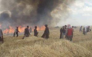 الحرائق تلتهم آلاف الدونمات من محصولي القمح والشعير في الجزيرة…