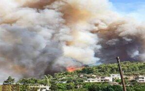حرائق الساحل مفتعلة وتعويضات للمتضررين بالملايين